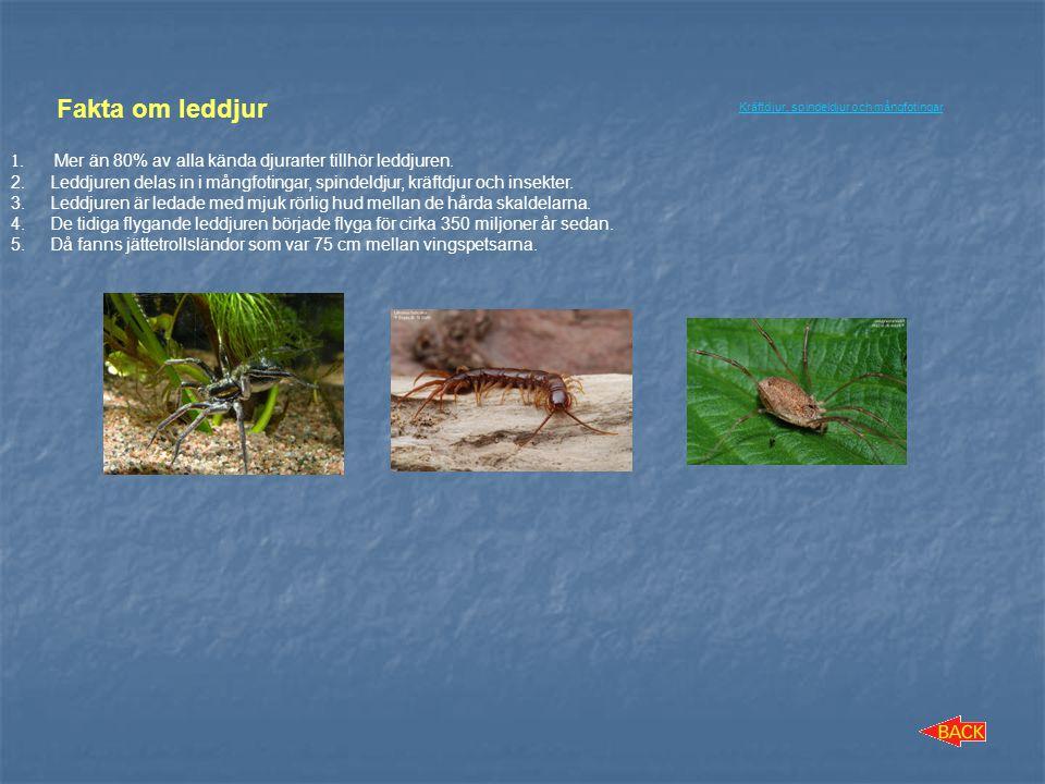 Fakta om leddjur Mer än 80% av alla kända djurarter tillhör leddjuren.