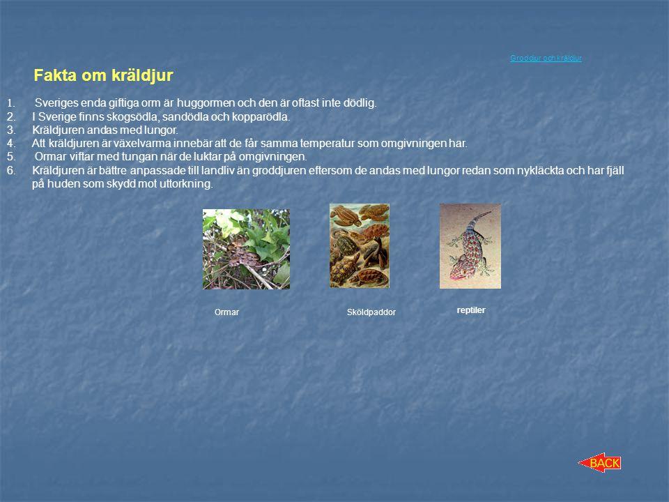 Groddjur och kräldjur Fakta om kräldjur. Sveriges enda giftiga orm är huggormen och den är oftast inte dödlig.