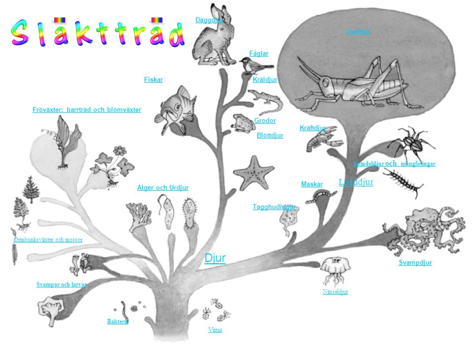. . Djur Ledddjur Insekter Fåglar Fiskar Kräldjur