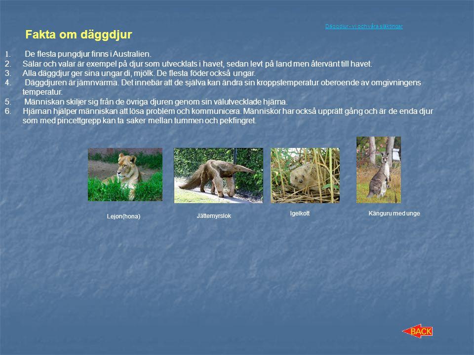 Fakta om däggdjur De flesta pungdjur finns i Australien.
