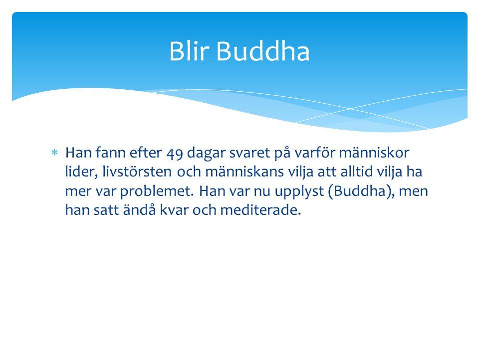 Blir Buddha
