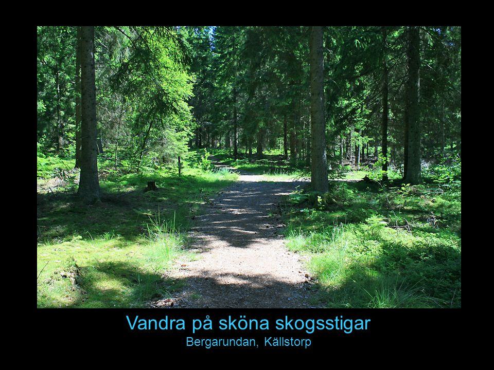 Vandra på sköna skogsstigar