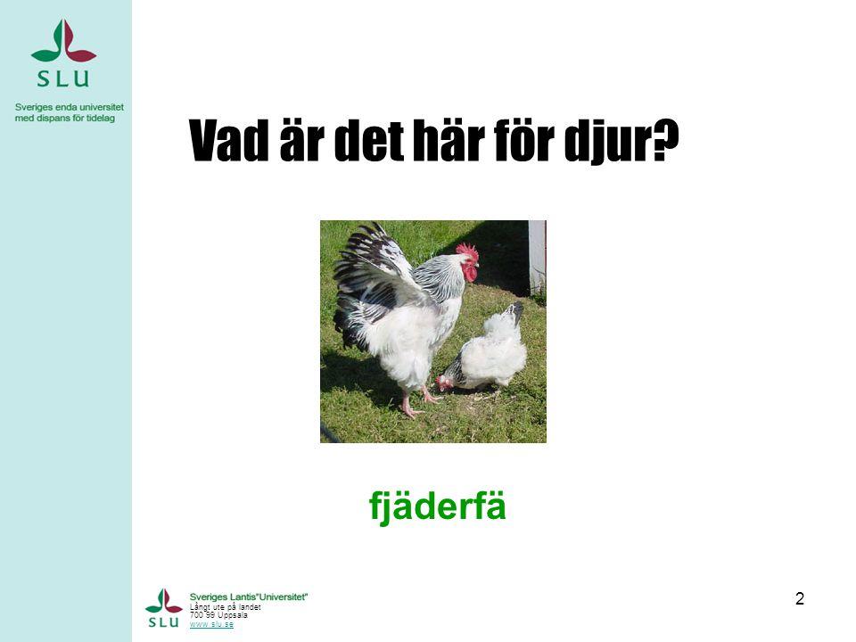 Vad är det här för djur fjäderfä Långt ute på landet 700 99 Uppsala