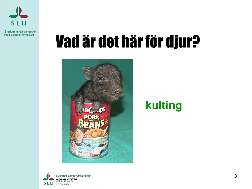 Vad är det här för djur kulting Långt ute på landet 700 99 Uppsala