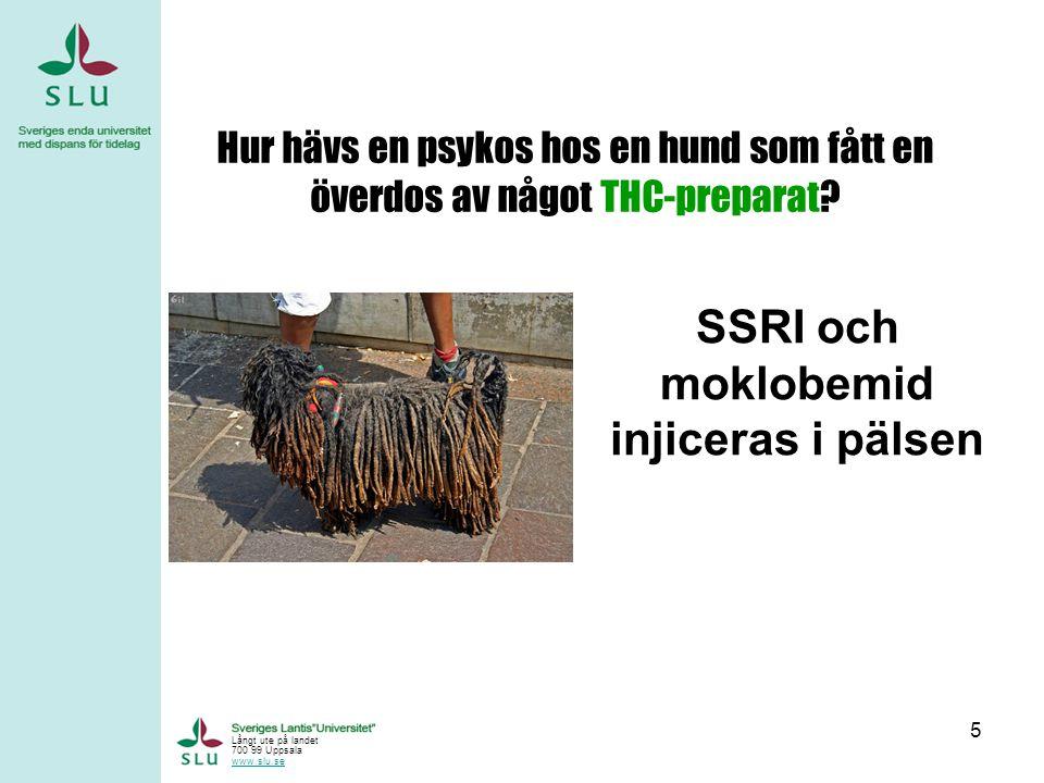 SSRI och moklobemid injiceras i pälsen