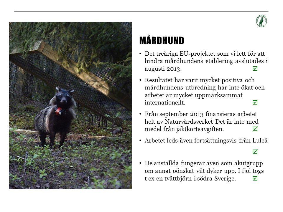 Mårdhund Det treåriga EU-projektet som vi lett för att hindra mårdhundens etablering avslutades i augusti 2013. 