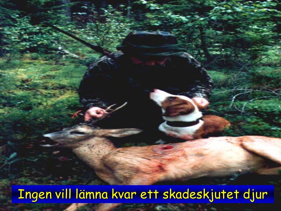 Ingen vill lämna kvar ett skadeskjutet djur