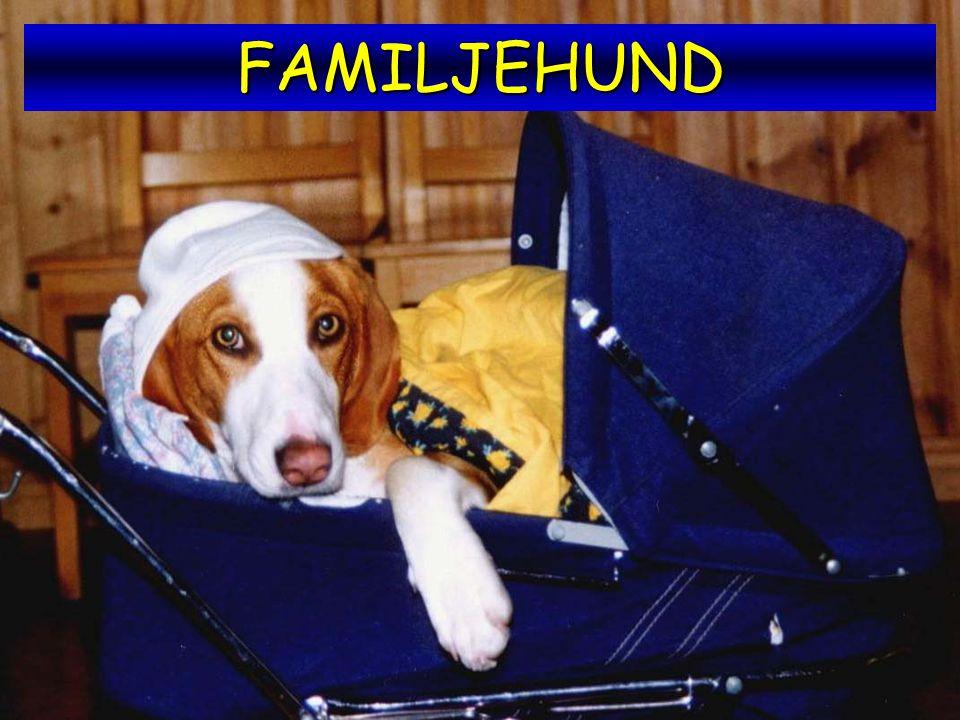 FAMILJEHUND