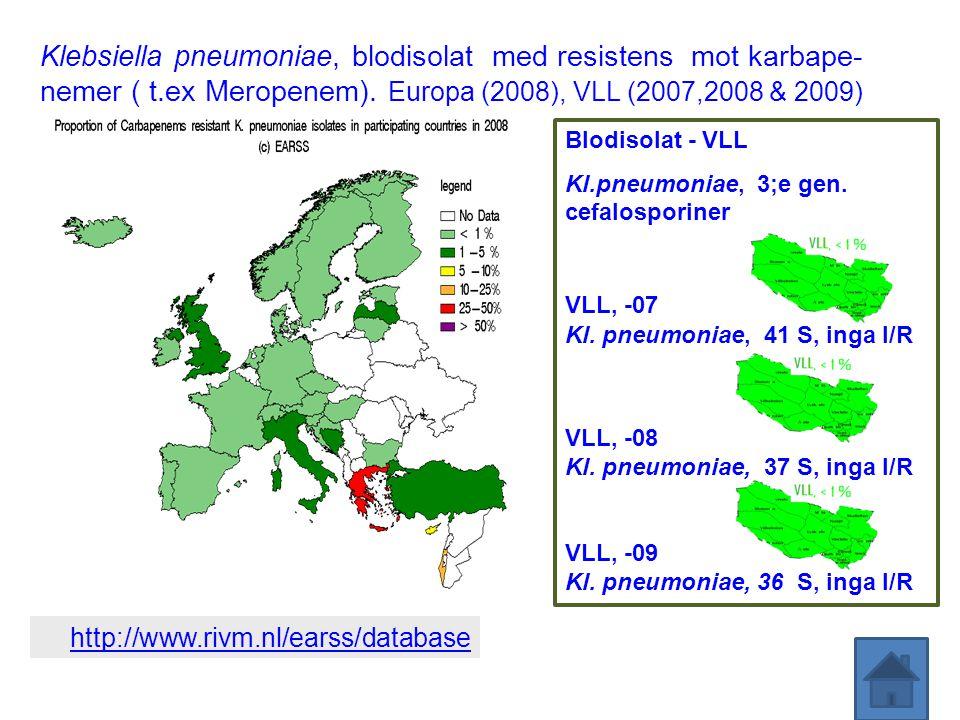 Klebsiella pneumoniae, blodisolat med resistens mot karbape-nemer ( t