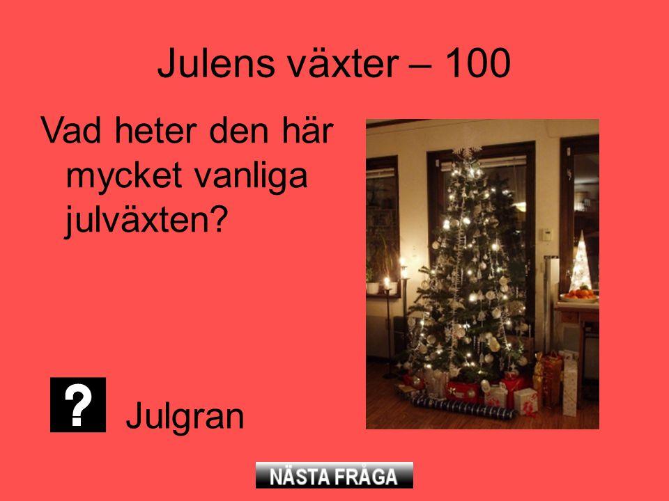 Julens växter – 100 Vad heter den här mycket vanliga julväxten