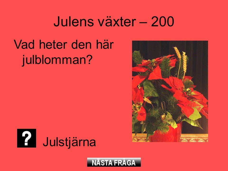 Julens växter – 200 Vad heter den här julblomman Julstjärna