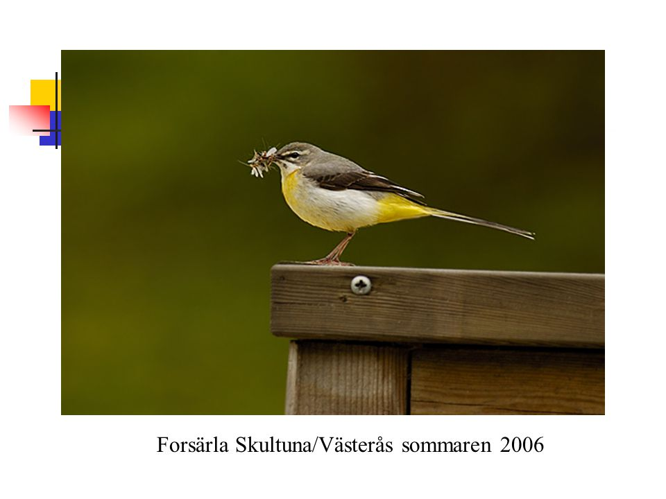 Forsärla Skultuna/Västerås sommaren 2006