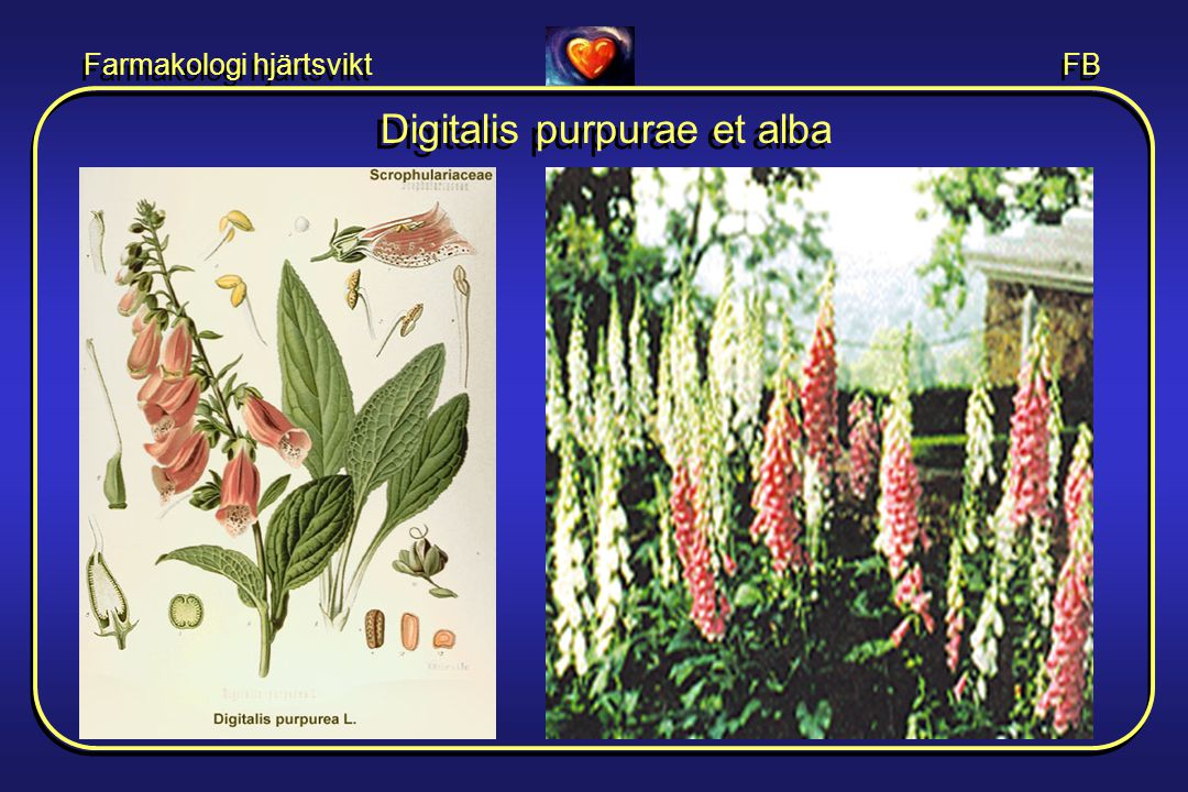 Digitalis purpurae et alba