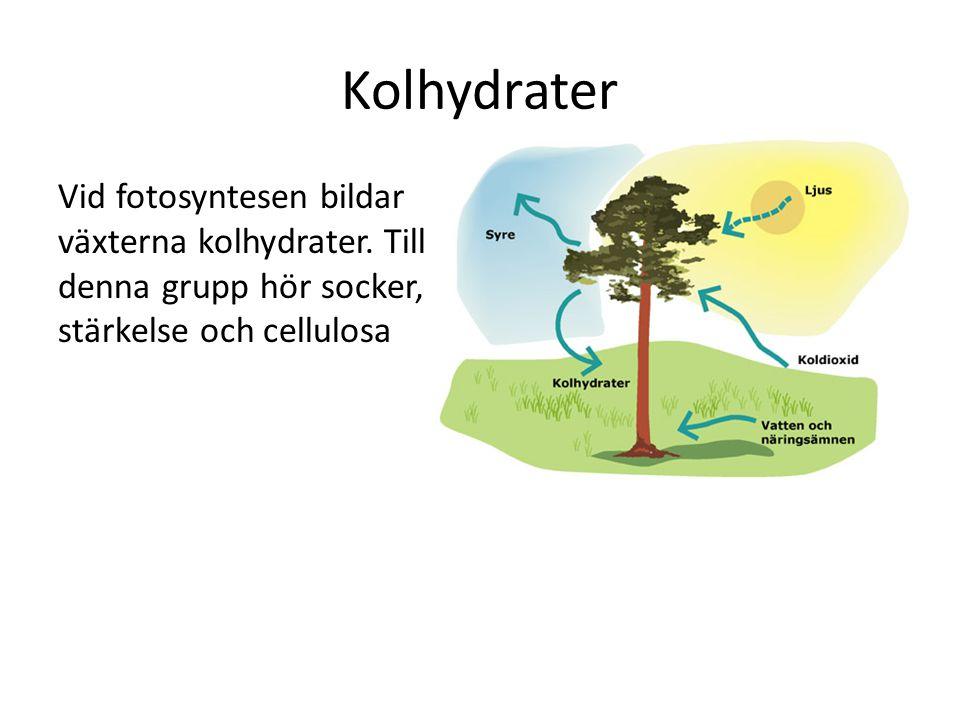 Kolhydrater Vid fotosyntesen bildar växterna kolhydrater.