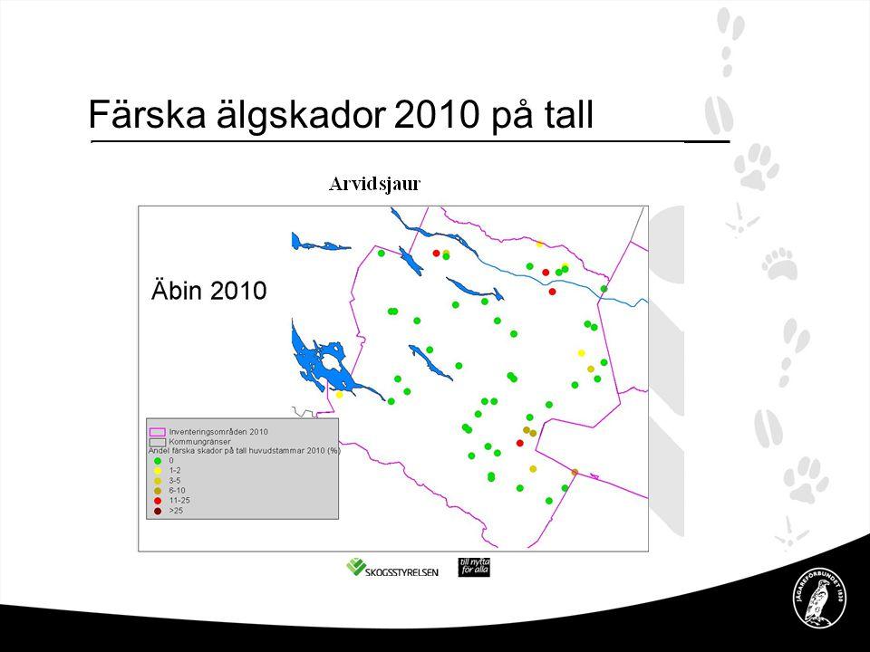 Färska älgskador 2010 på tall