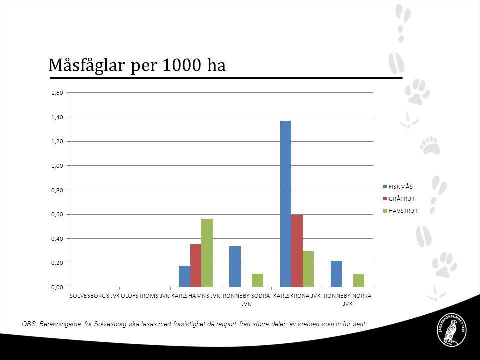 Måsfåglar per 1000 ha OBS.