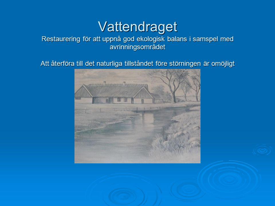 Vattendraget Restaurering för att uppnå god ekologisk balans i samspel med avrinningsområdet Att återföra till det naturliga tillståndet före störningen är omöjligt
