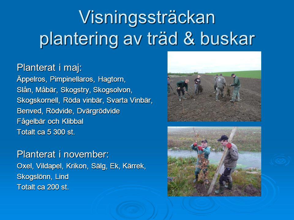 Visningssträckan plantering av träd & buskar