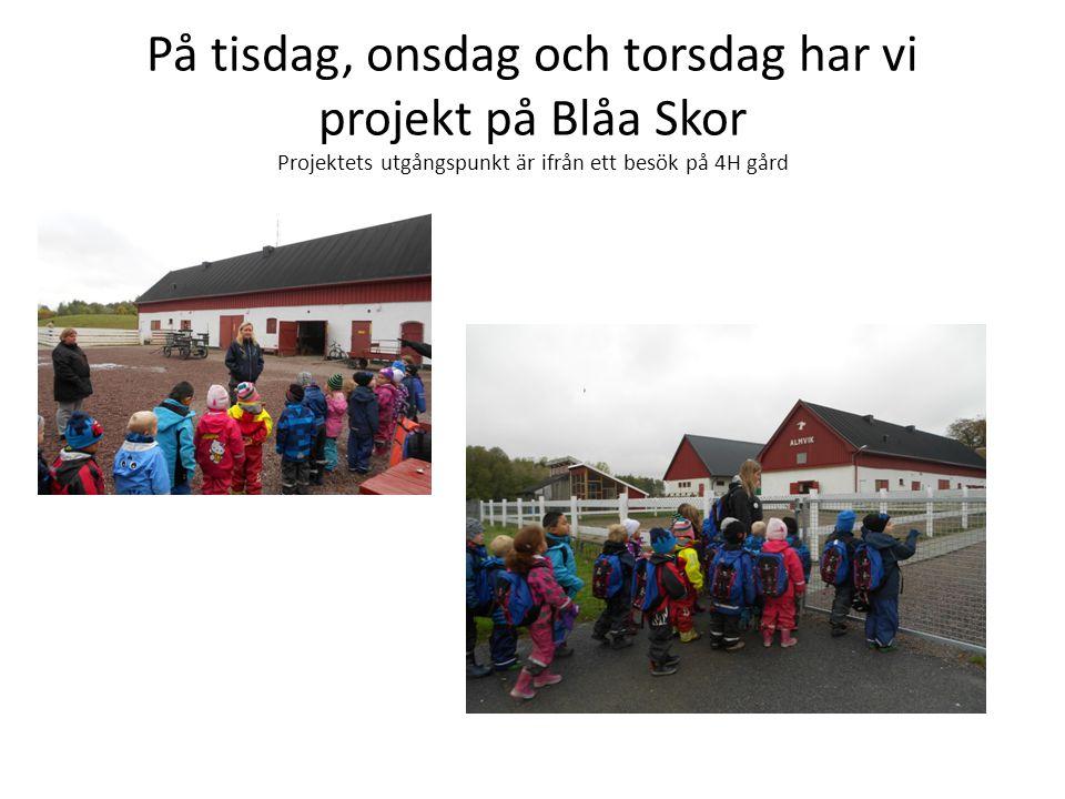 På tisdag, onsdag och torsdag har vi projekt på Blåa Skor Projektets utgångspunkt är ifrån ett besök på 4H gård