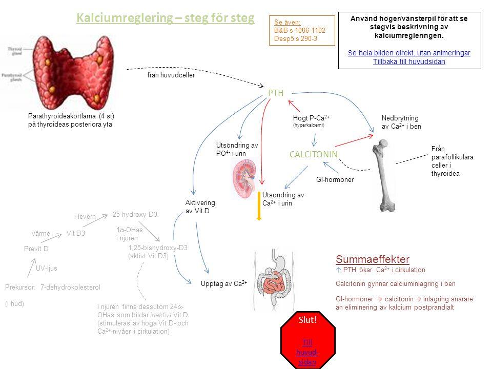 Kalciumreglering – steg för steg