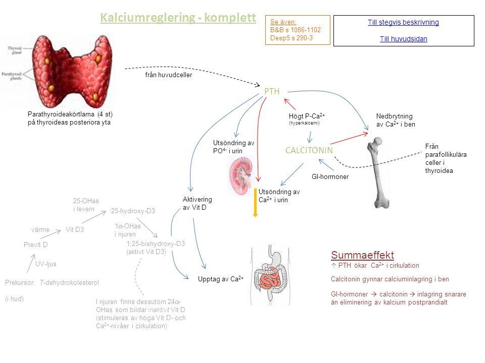Kalciumreglering - komplett