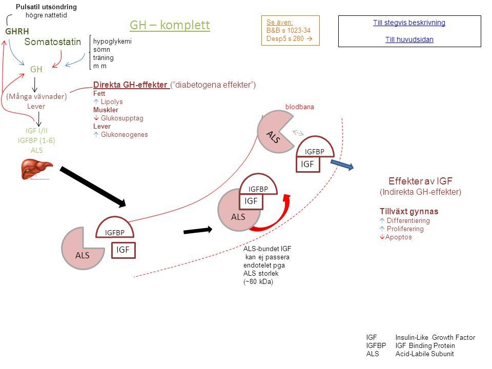 GH – komplett GHRH Somatostatin GH ALS IGF Effekter av IGF IGF ALS ALS
