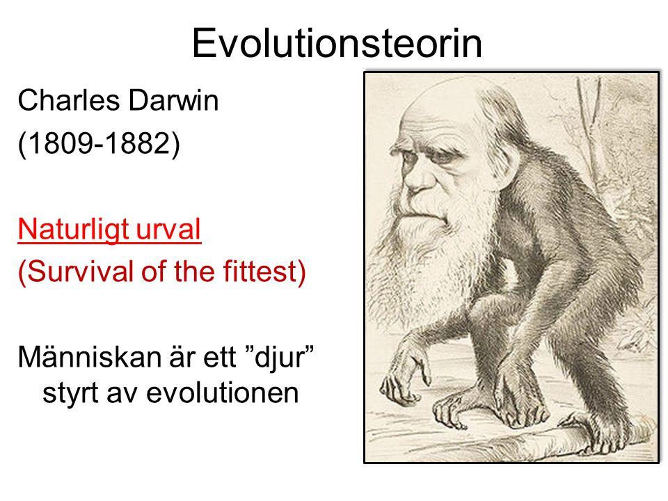 Evolutionsteorin Charles Darwin (1809-1882) Naturligt urval