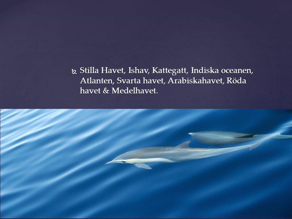 Stilla Havet, Ishav, Kattegatt, Indiska oceanen, Atlanten, Svarta havet, Arabiskahavet, Röda havet & Medelhavet.
