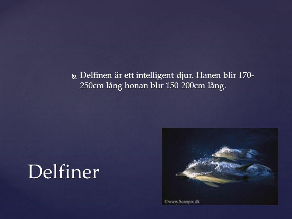 Delfinen är ett intelligent djur