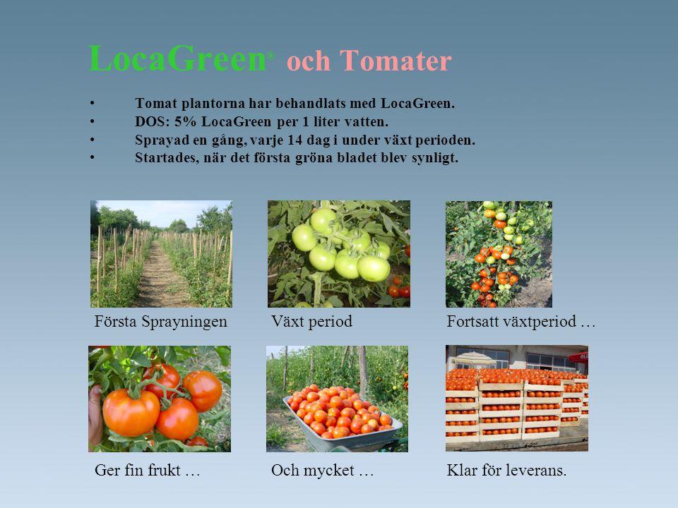 LocaGreen® och Tomater