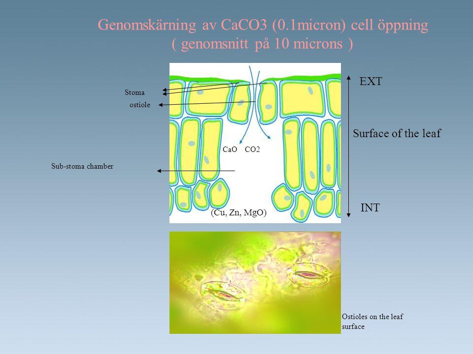 Genomskärning av CaCO3 (0