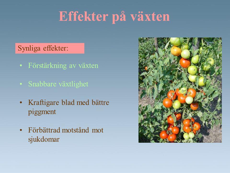 Effekter på växten Synliga effekter: Förstärkning av växten