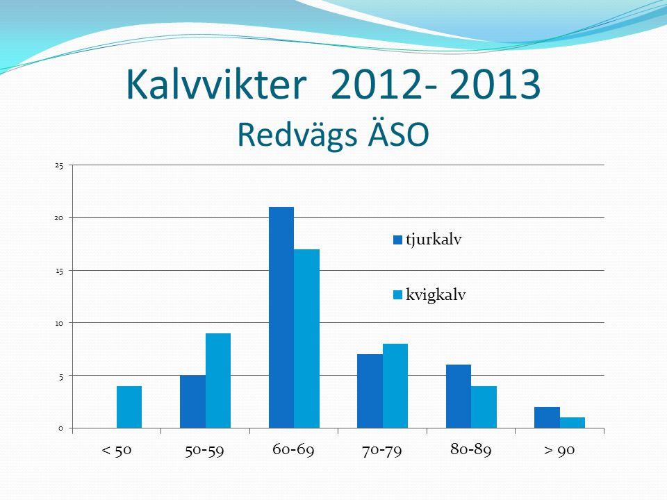Kalvvikter 2012- 2013 Redvägs ÄSO