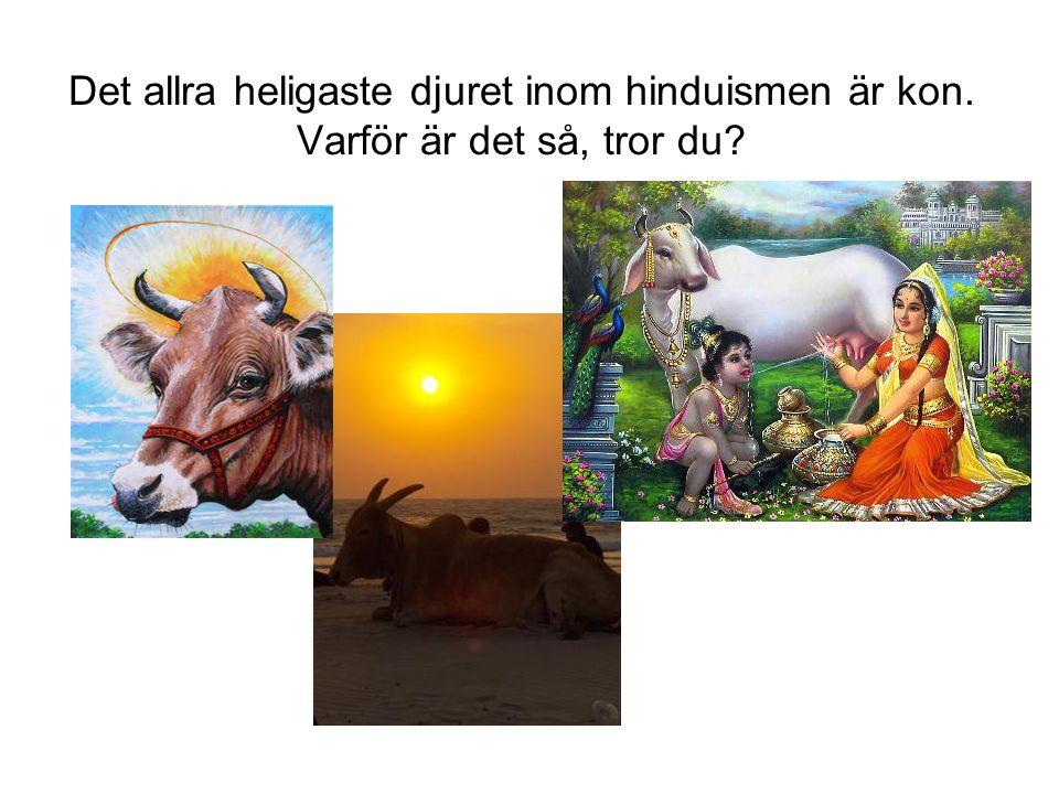 Det allra heligaste djuret inom hinduismen är kon