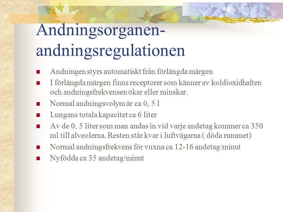 Andningsorganen- andningsregulationen