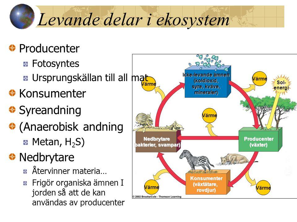 Vilka levande delar finns i ett ekosystem