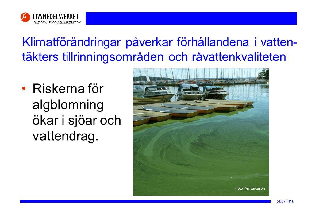 Riskerna för algblomning ökar i sjöar och vattendrag.