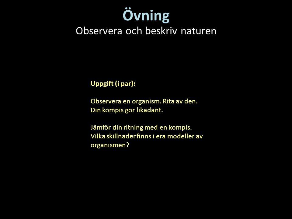 Observera och beskriv naturen
