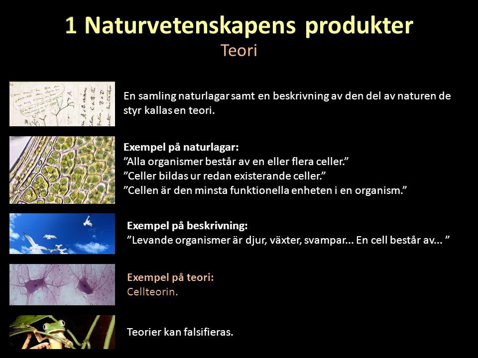 1 Naturvetenskapens produkter