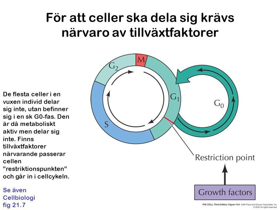 För att celler ska dela sig krävs närvaro av tillväxtfaktorer