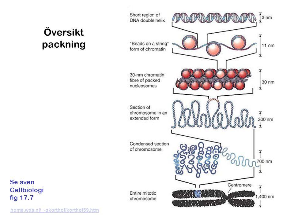 Översikt packning Se även Cellbiologi fig 17.7