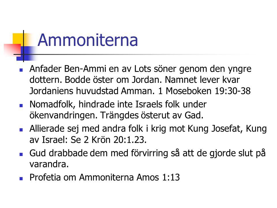 Ammoniterna