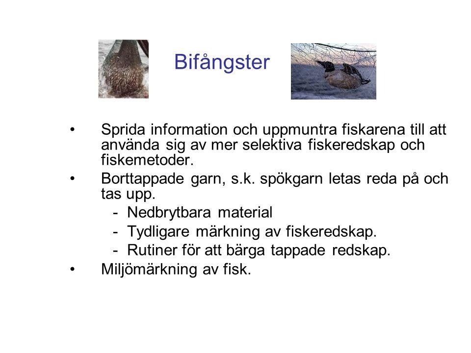 Bifångster Sprida information och uppmuntra fiskarena till att använda sig av mer selektiva fiskeredskap och fiskemetoder.