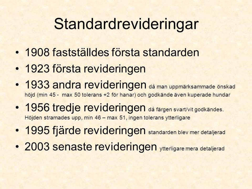 Standardrevideringar