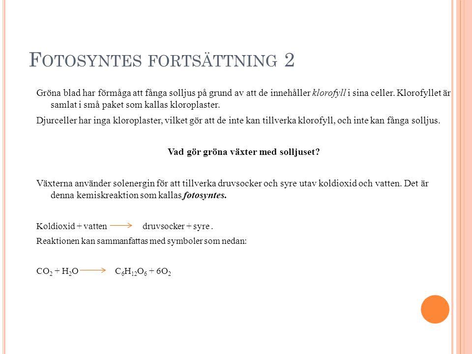 Fotosyntes fortsättning 2