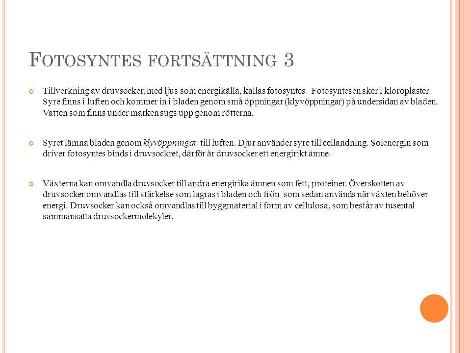 Fotosyntes fortsättning 3