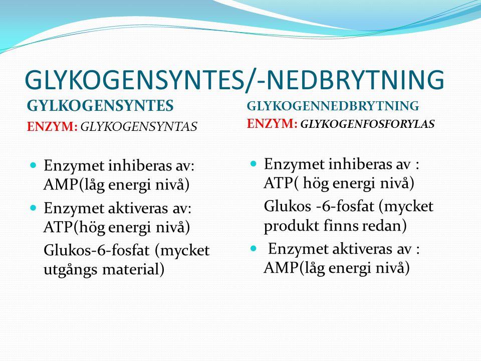 GLYKOGENSYNTES/-NEDBRYTNING