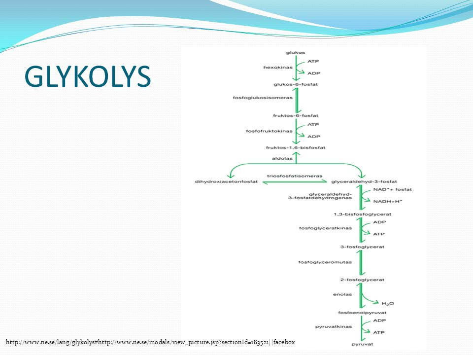 GLYKOLYS   sectionId=183521||facebox.