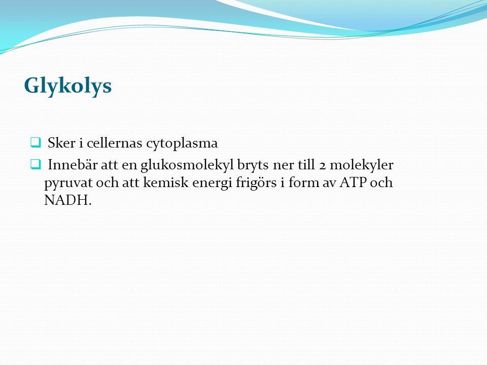 Glykolys Sker i cellernas cytoplasma