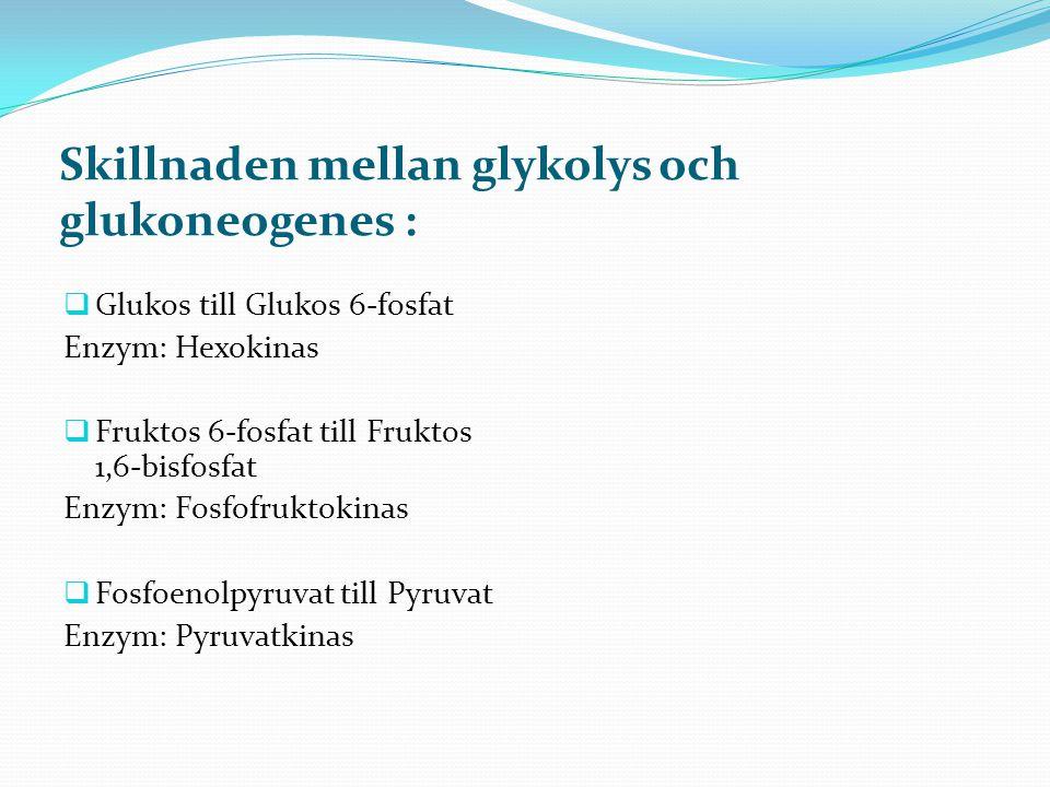 Skillnaden mellan glykolys och glukoneogenes :